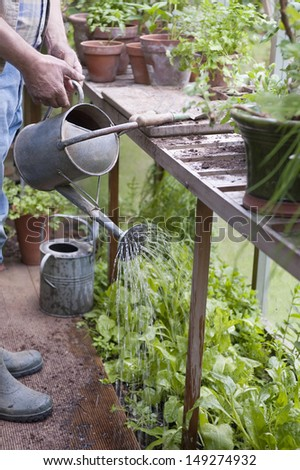 Cropped image of senior man watering plants in greenhouse - stock photo