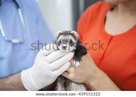 Cropped Image Of Woman And Doctor Holding Weasel - stock photo