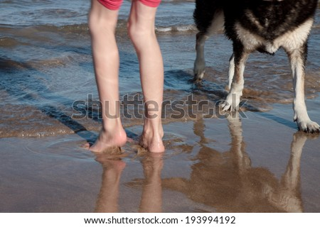 cropped view of little girl and her pet dog's legs and feet playing in shallow water at a beach  - stock photo