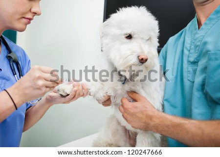 Cropped view of young veterinarian doctors taking blood work from dog - stock photo