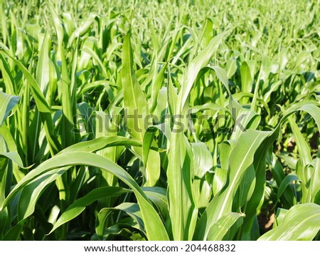 Crops Growing on Farmland Background