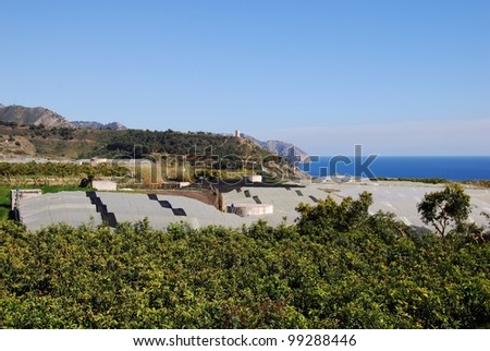 Crops growing under poly-tunnels by the sea, Maro, Costa del Sol, Malaga Province, Andalusia, Spain, Western Europe. - stock photo