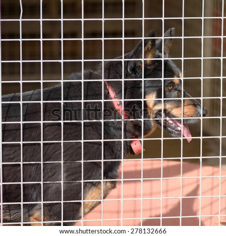 Cross breed dog in his kennel in a dog rescue centre - stock photo