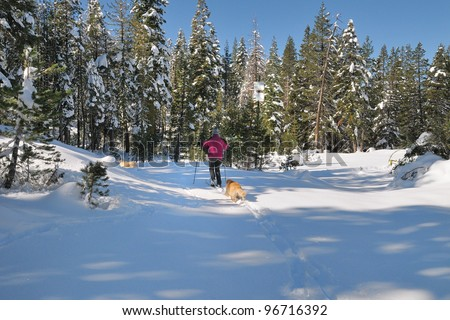 Cross country skiing with dogs in the California Sierra Nevada mountains - stock photo