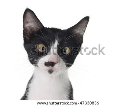 Cross eyed kitten - stock photo