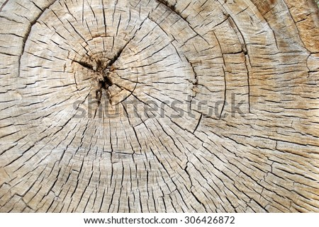 Cross Section of a Old Decaying Cotton Wood Tree Showing Tree Rings and Cracks - stock photo