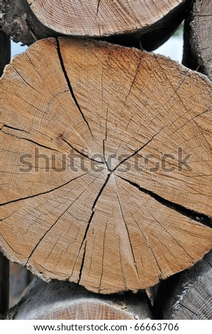 cross section of a tree