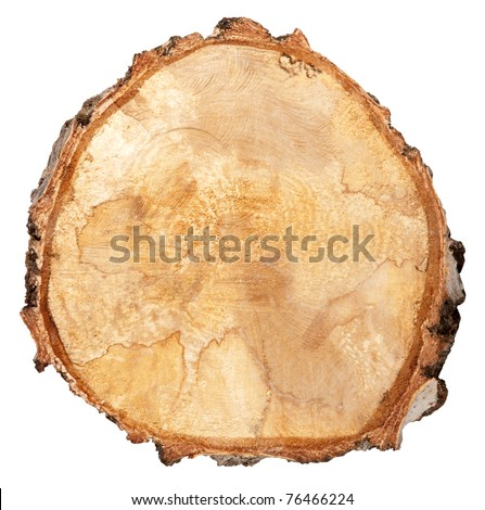 Cross section of a tree trunk - stock photo