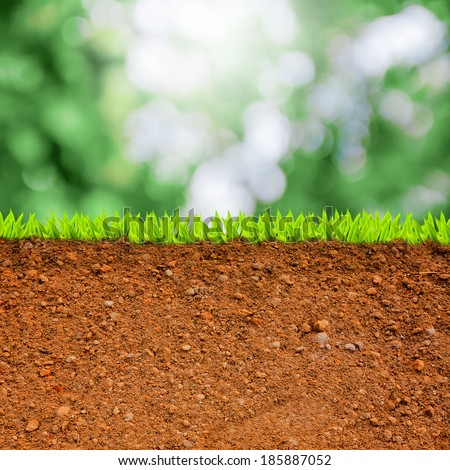 cross section of grass and soil against green bokeh. - stock photo