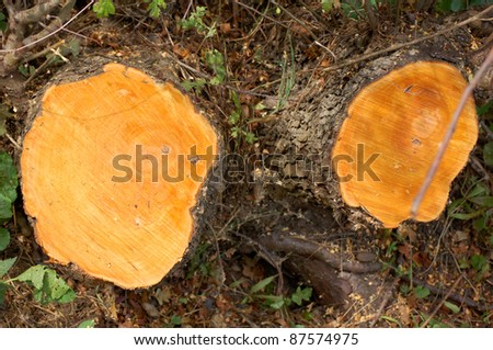 Cross section of rings on tree stumps