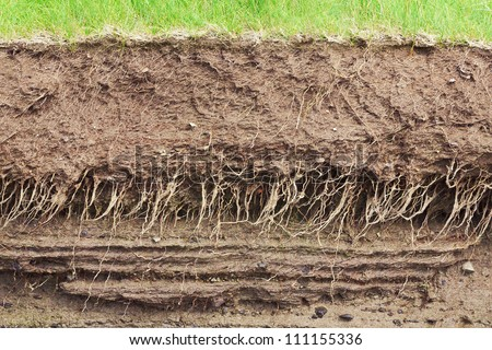 Cross section of the earth with roots and layers of dirt - stock photo
