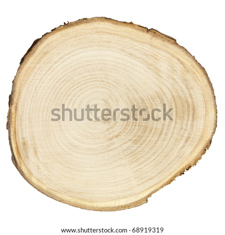 Cross section of tree trunk isolated on white, clipping path included - stock photo