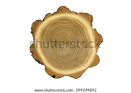 Cross section of tree trunk showing growth rings isolated on white background - stock photo