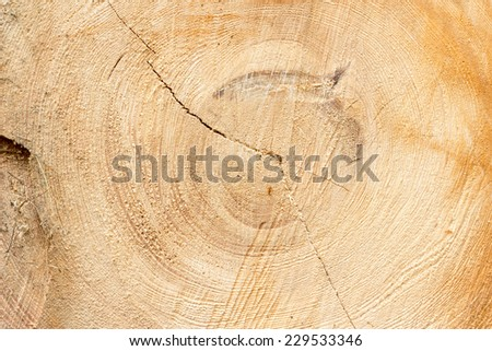 Cross section of tree trunk texture or background - stock photo
