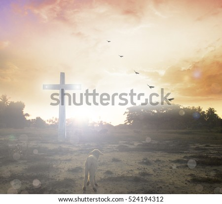 Cross Sheep Lamb God Shepherd Christmas Stock Photo Download Now