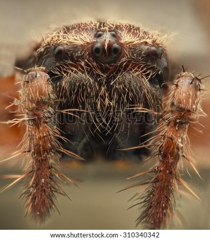 Cross spider extreme closeup - stock photo