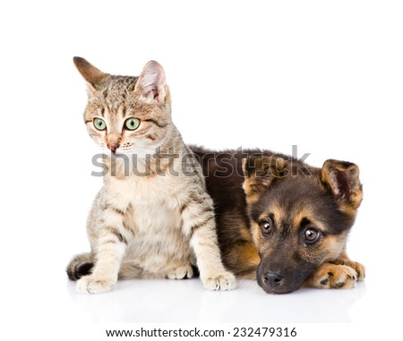 crossbreed dog and cat together. isolated on white background - stock photo