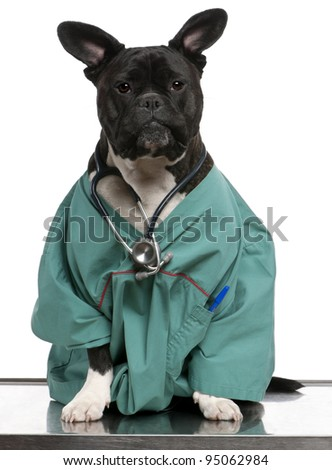 Crossbreed dog, dog dressed in a doctor coat and wearing a stethoscope against a white background - stock photo