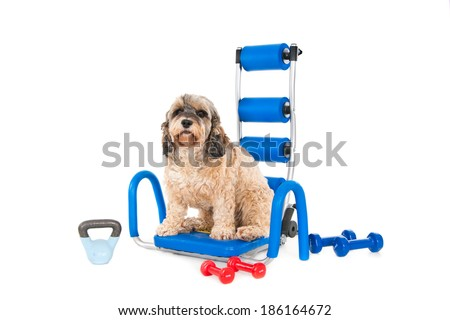 Crossbreed dog ready for gym, isolated on white - stock photo