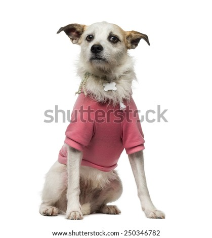 Crossbreed dog (4.5 years old) dressed - stock photo