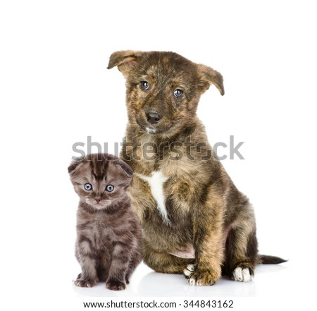 Crossbreed puppy and small kitten sitting together. isolated on white background - stock photo