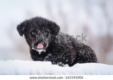Crossbreed puppy from a shelter - stock photo