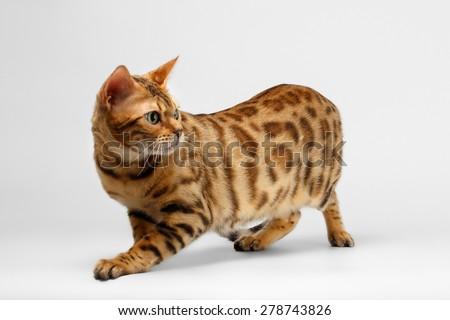 designer cat litter box uk