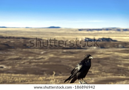 Crow at the Painted Desert at Petrified Forest National Park, Arizona  Animal / Bird / Crow /  Raven / Arizona / Desert Background / Las Vegas / Utah / New Mexico Background - stock photo