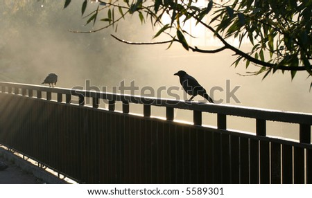 Crow seating on the iron rail and morning sunbeams around it. - stock photo