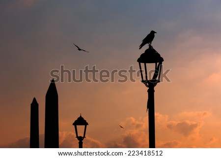 Crow sits on the street lamp near Obelisks of hippodrome area in Sultan Ahmet square, Istanbul - stock photo