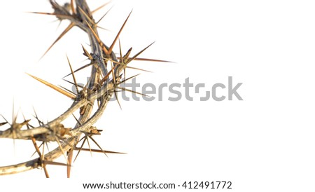 crown of thorns on white background