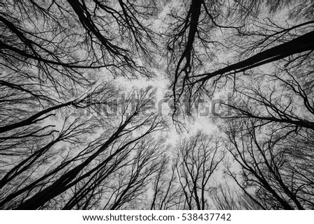 Crown trees. Bottom View.Trees seen from bellow - landscape perspective.Branch with hoar-frost snow bottom view.bottom view of trees and branches covered with snow, blue sky