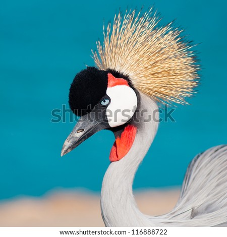 Crowned crane on background of lake - stock photo
