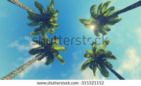 Crowns of four palm trees against blue sunny sky background - stock photo
