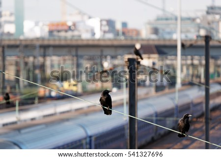 crows on railroad in Paris suburb