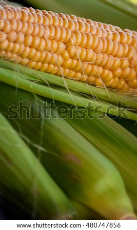 crude yellow corn with green leaves and hair lies on several closed cob, not cleared, natural look