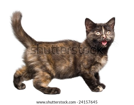 Crying kitty on a white background - stock photo