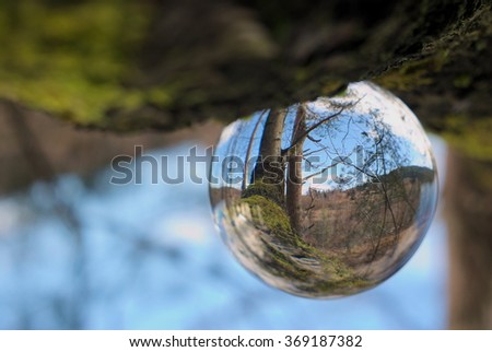 Crystal ball in forest  - stock photo