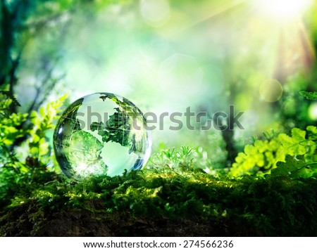 crystal globe resting on moss in a forest - environment concept  - stock photo