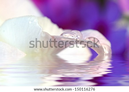 Crystal water drops with purple flowers in background (Macro) - stock photo