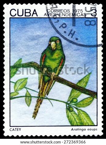 CUBA - CIRCA 1975: A stamp printed by Cuba, shows  bird  Ataringo eoups, Indigonous Birds, circa 1975  - stock photo