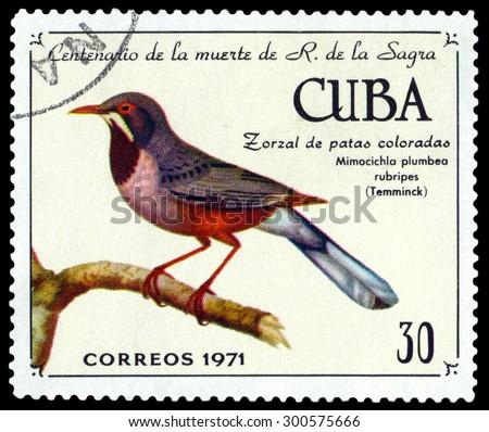 CUBA - CIRCA 1971: A stamp printed by Cuba, shows bird  red-legged thrush, Mimocichla plumbea rubripes, , circa 1971 - stock photo