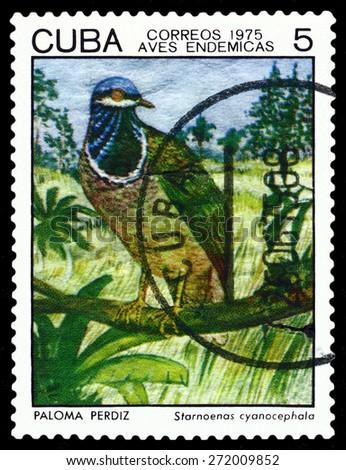 CUBA - CIRCA 1975: A stamp printed by Cuba, shows  bird  Starnoenas cyanocephala, Indigonous Birds, circa 1975  - stock photo