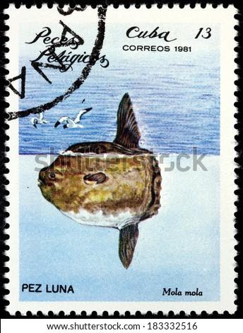 CUBA - CIRCA 1981: A stamp printed by CUBA shows Ocean Sunfish or Common Mola (Mola mola), circa 1981 - stock photo
