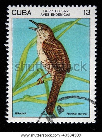 CUBA - CIRCA 1977: A stamp printed by Cuba shows the Bird Zapata Wren - Ferminia cerverai, stamp is from the series, circa 1977