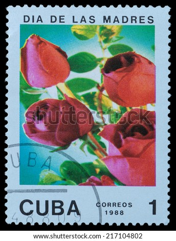 CUBA - CIRCA 1988: A stamp printed in Cuba shows flower rose, circa 1988 - stock photo