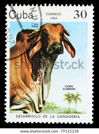 """CUBA - CIRCA 1984: A Stamp printed in CUBA shows image of a Grazing Cow with the description """"Artificial pastures"""" from the series """"Cattle Breeding"""", circa 1984 - stock photo"""
