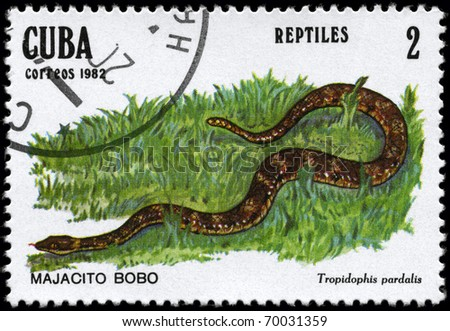 "CUBA - CIRCA 1982: A Stamp printed in CUBA shows the image of a Dwarf Boa with the description ""Tropidophis pardalis"" from the series ""Reptiles"", circa 1982 - stock photo"