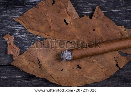 Cuban cigar on tobacco leaves, close view - stock photo