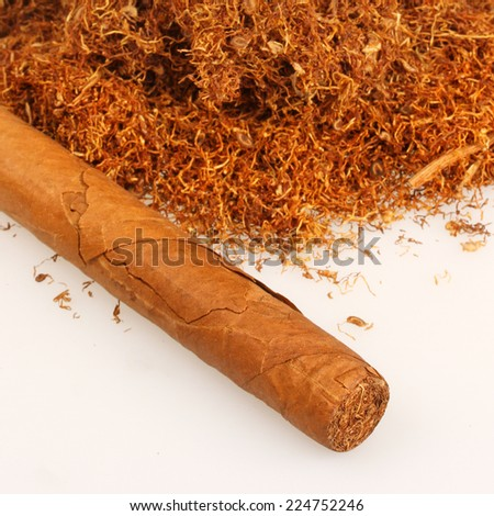 Cuban cigar with pile of tobacco - stock photo